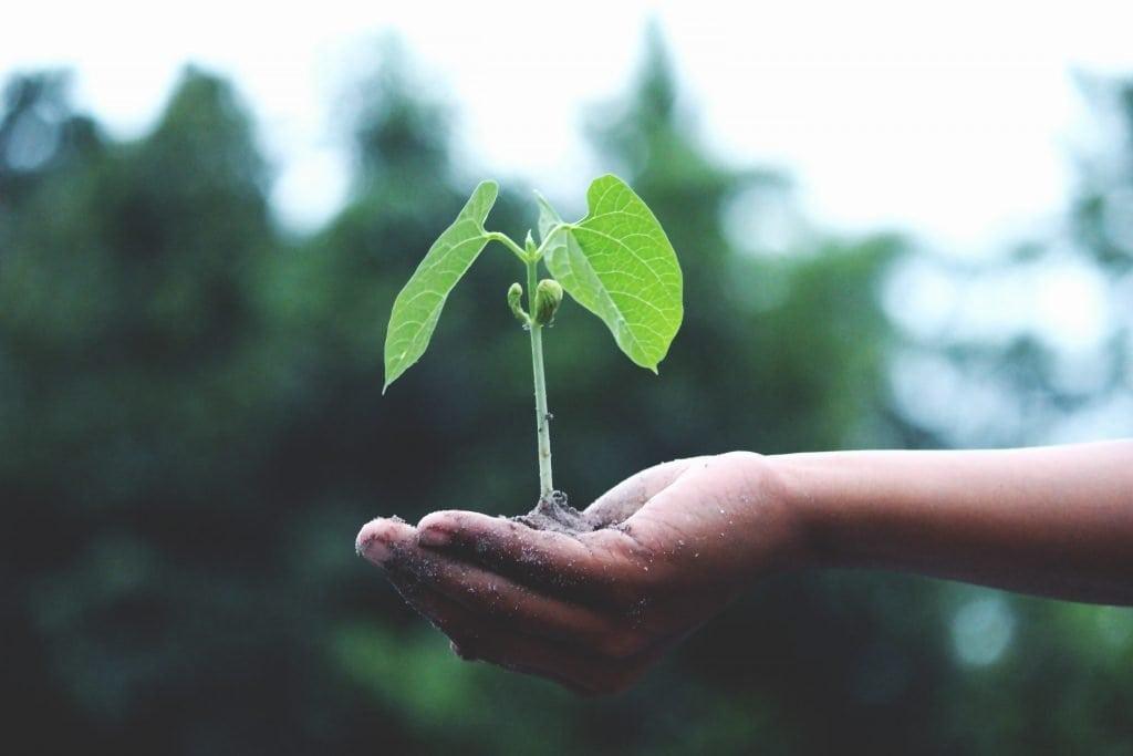 Perbedaan Antara Pengemasan Recyclable, Biodegradable, dan Compostable